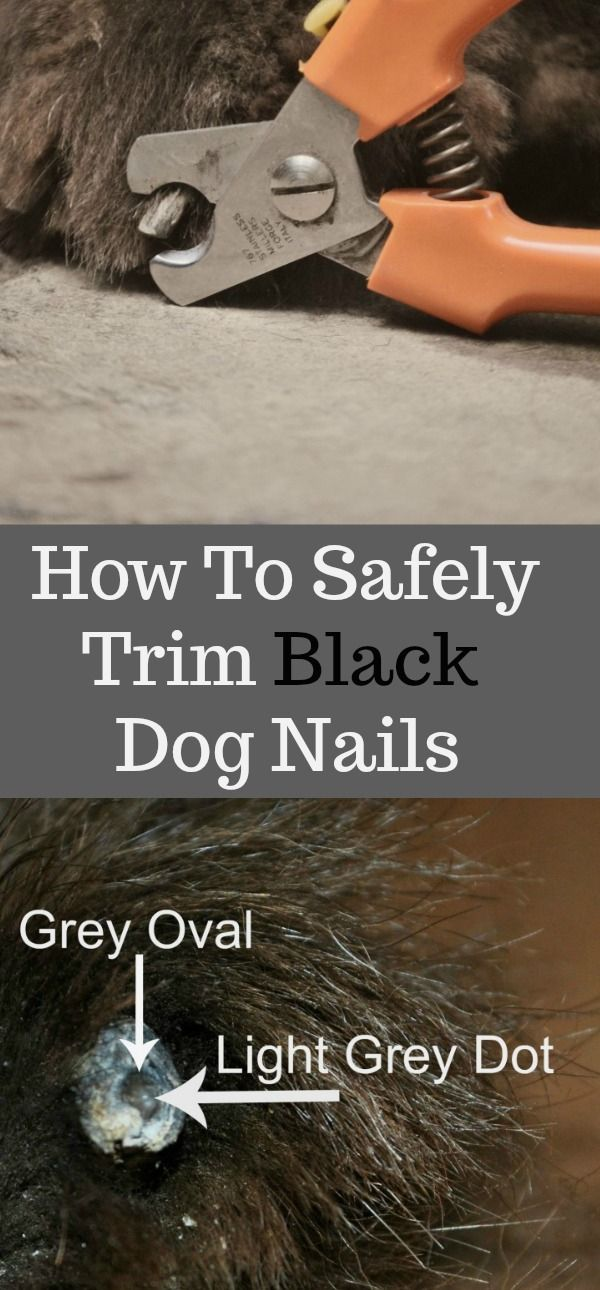 how to safely trim your dog s black nails doggy grooming