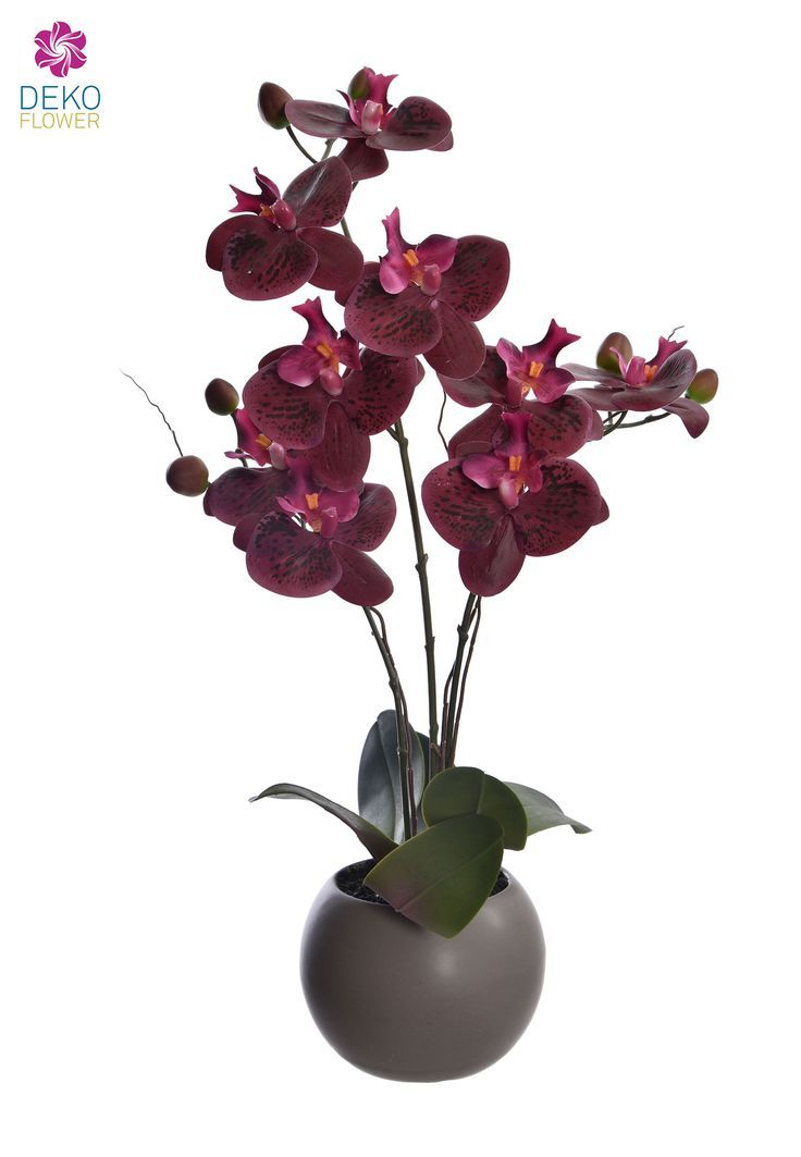 Real Touch Orchidee 50 Cm Im Keramik Topf Weinrot