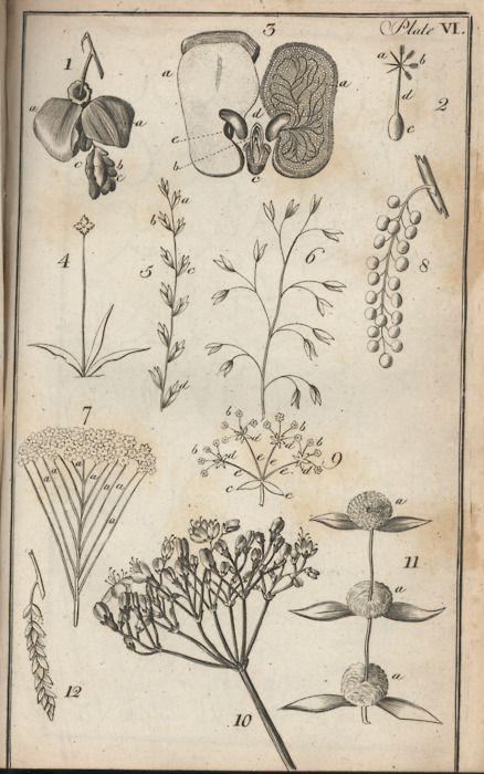 Tumblr Of Beautiful Scientific Illustrations Botanical Drawings Scientific Illustration Botanical Art