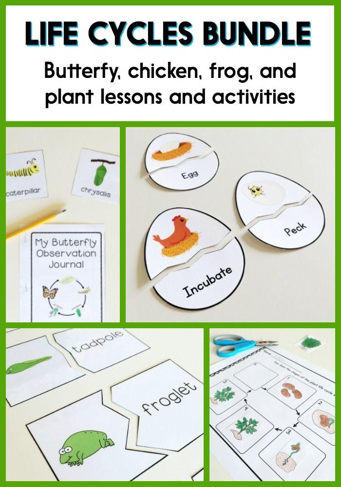 life cycles activities lesson plans for preschool kindergarten or 1st grade oviparous unit. Black Bedroom Furniture Sets. Home Design Ideas