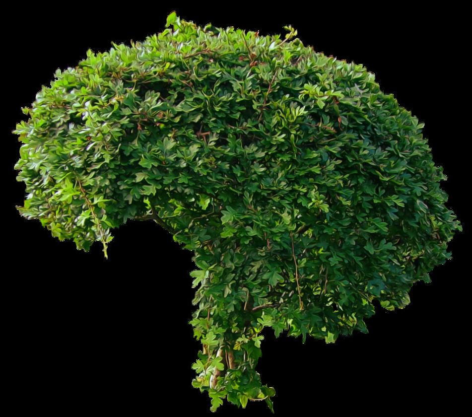 Small Green Bushy Tree PNG.. by AledJonesStockNArt