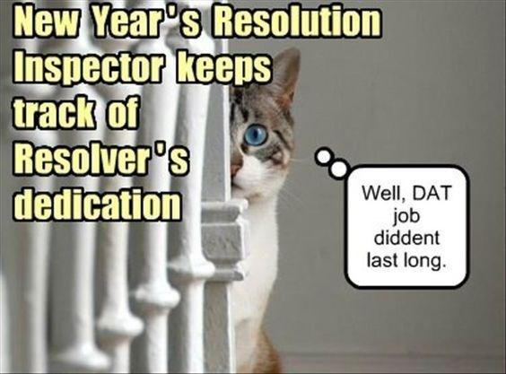 These Cats Are All Ready For 2020 New Year S Resolutions Memes Funny Animal Pictures Funny Meems Funny Animals