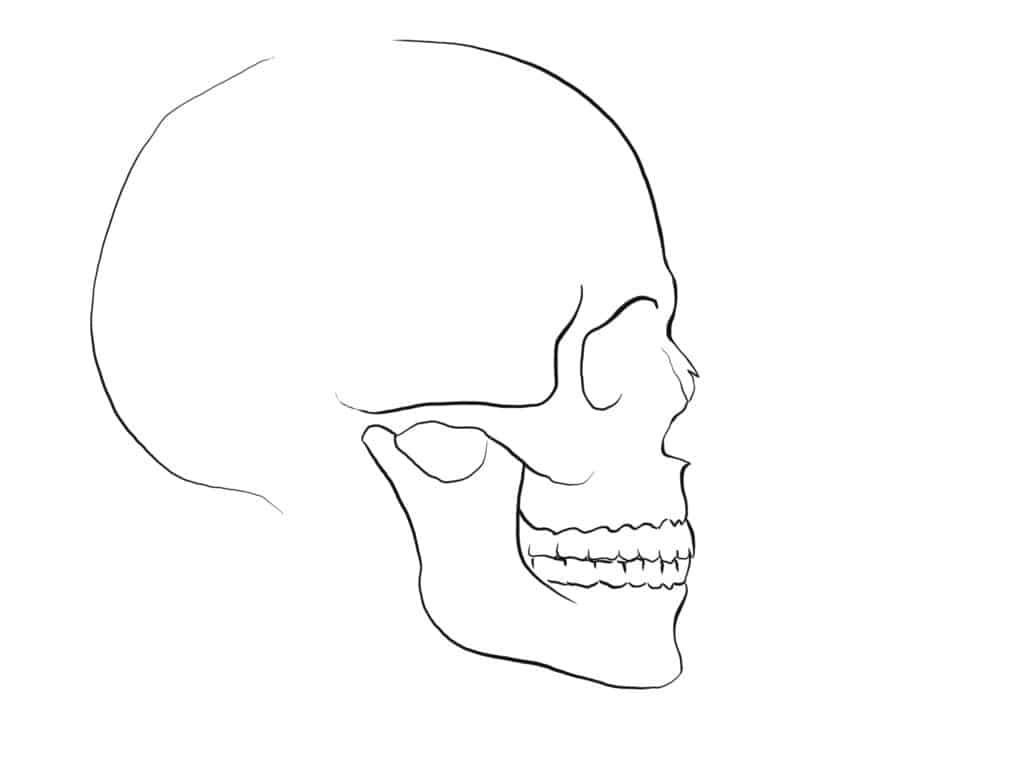 How To Draw A Nose Side View Skull Skulls Drawing Nose Drawing Skull Painting