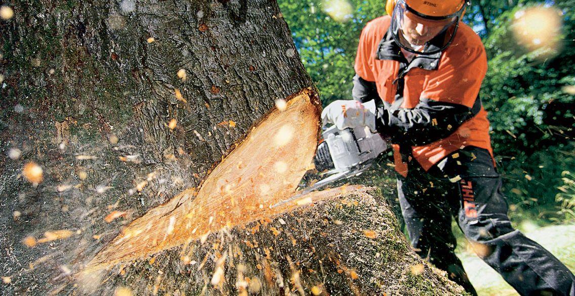 Image result for TREE REMOVAL STILH