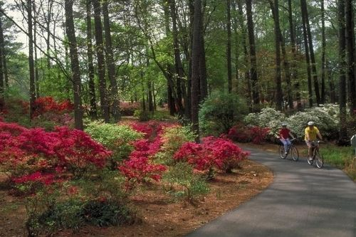 Callaway gardens enjoy this 13 000 acre award winning resort and gardens with butterflies and for Callaway gardens treetop adventure