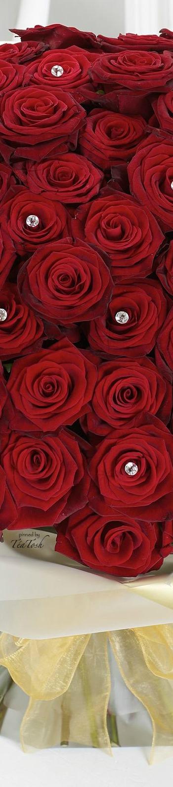 Téa Tosh Ultimate 100 Grand Prix Rose Beautiful red