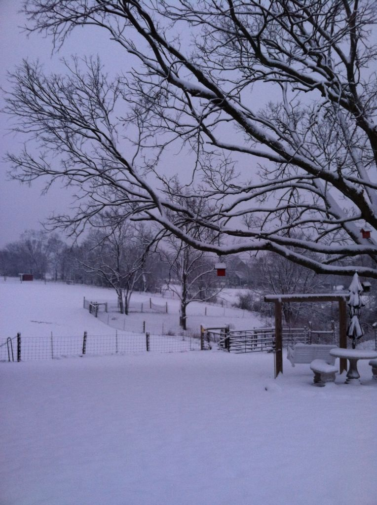 Winter in our back yard in Ohio