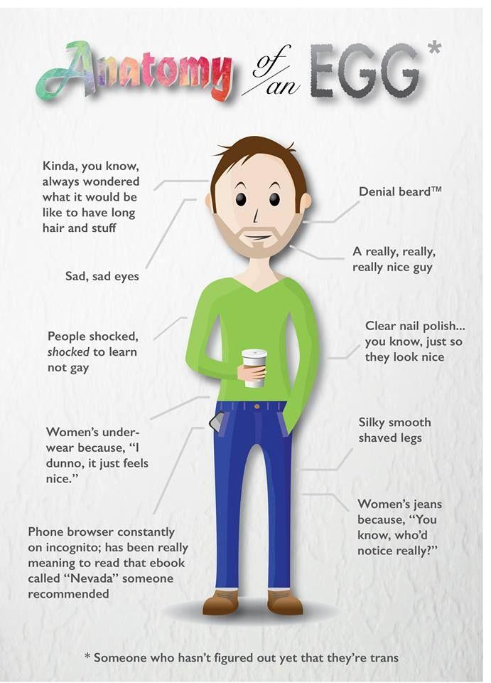 Anatomy of an Egg | Pinterest | Anatomy