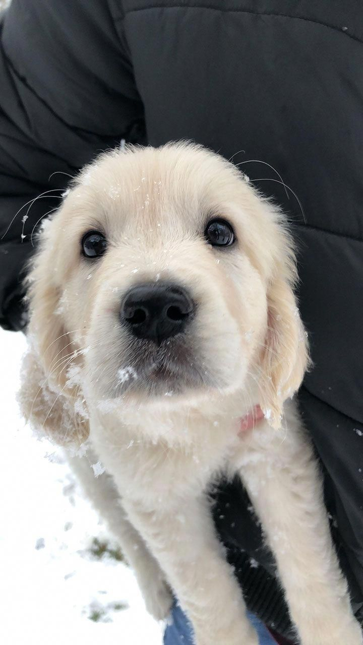 Visit Our Internet Site For Even More Info On Cute Dogs It Is