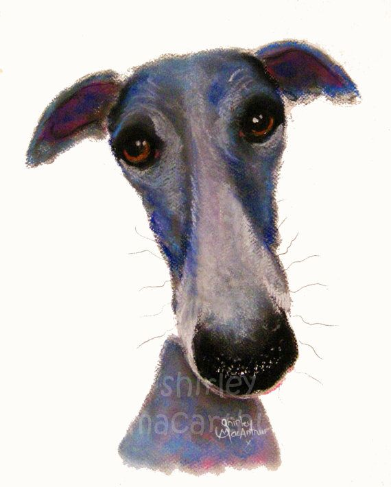Whippet Greyhound Print Art Wall Canvas Puppy Dog By Shirley