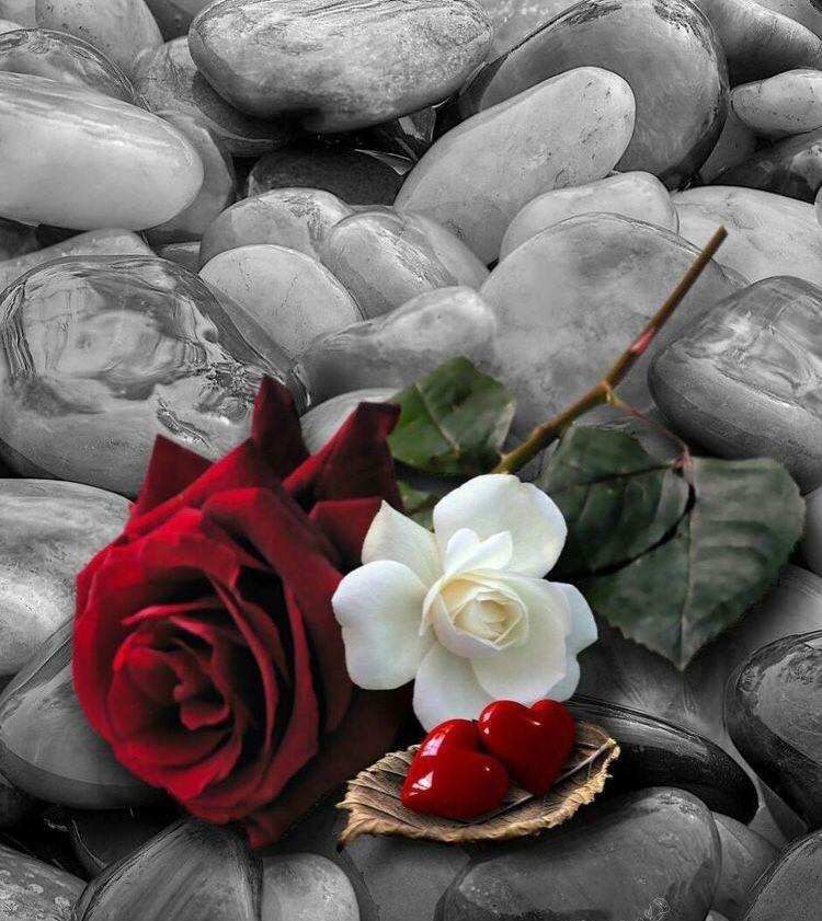خلفيات ورود جميلة جدا Beautiful Flowers Pretty Wallpapers Aesthetic Iphone Wallpaper