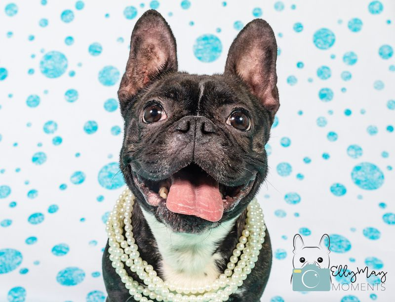 Polka Dots And Pearls And The Cutest Frenchie Adelle Dog