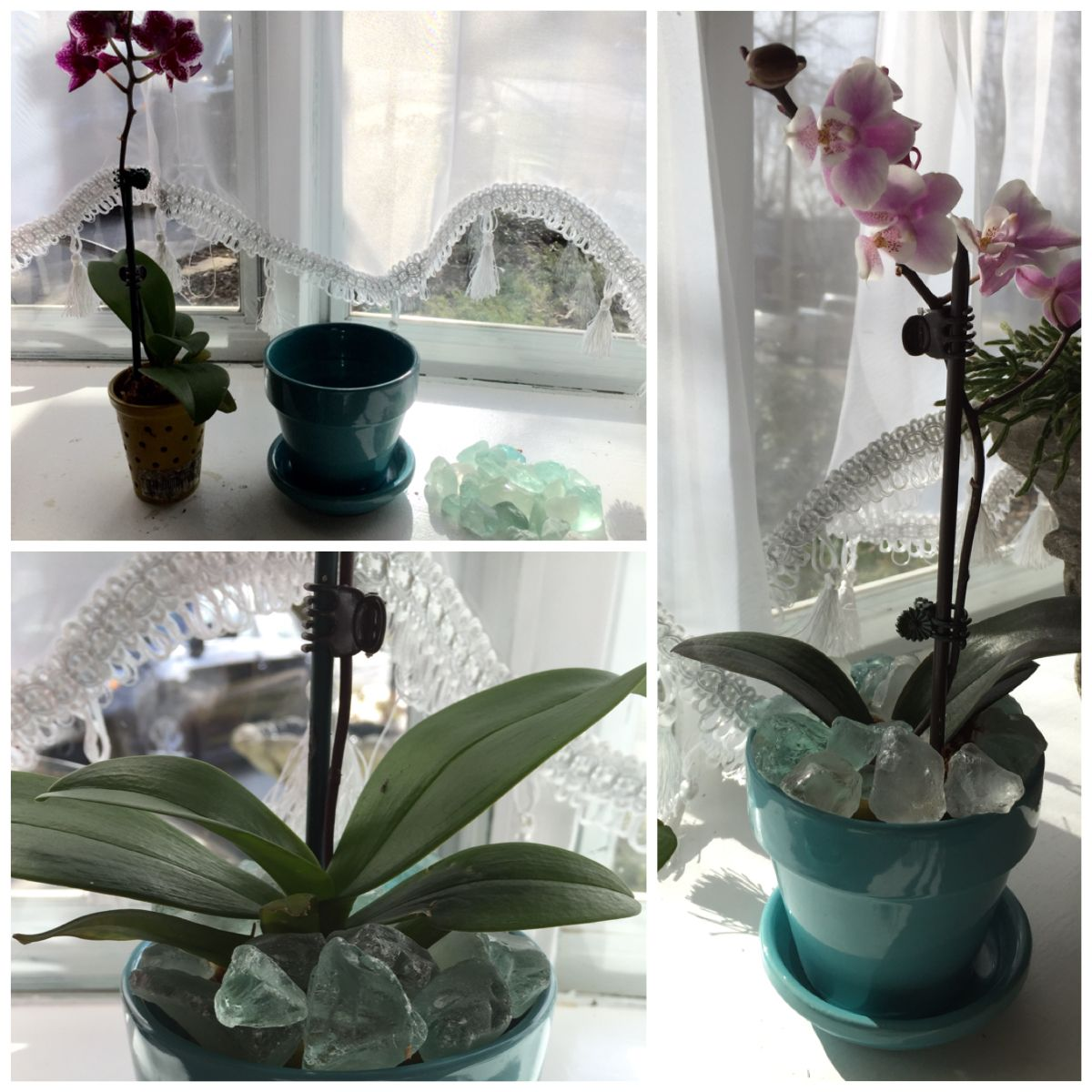 place inside decorative pot and surround with sea glass marbles rocks etc using sea glass makes a great decoration for a frozen