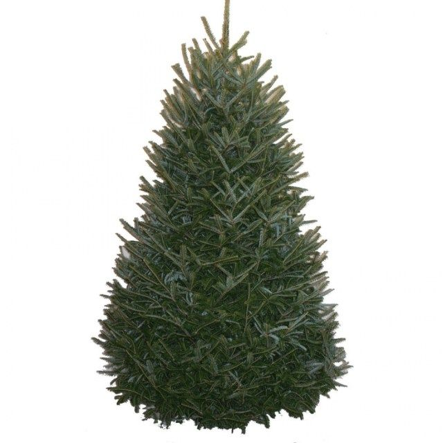 shop fresh christmas trees at lowes pertaining to lowes christmas trees - 40 Awesome Lowes Christmas Trees Ideas Christmas Decor & Craft