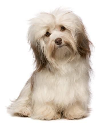 7 Hypoallergenic Apartment Dogs That Make The Best Pets Best Small Dogs Dog Breeds Dogs Kids
