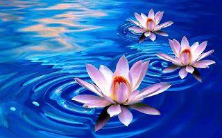Bunga Teratai Kuncup Sebelum Mekar Lotus Flower Bunga Teratai Seni Bunga