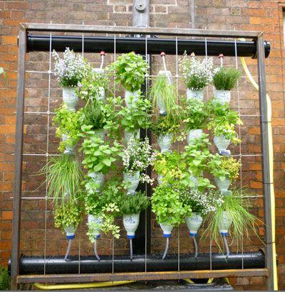 Jardin en bouteille recherche google plantes d for Recherche plante