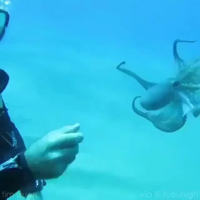 Octopupper