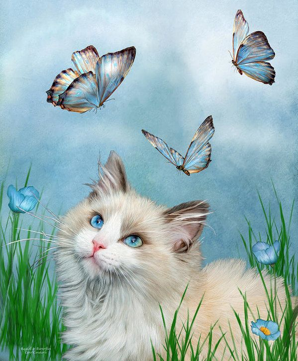 Ragdoll Kitty And Butterflies Poster by Carol Cavalaris. All posters are professionally printed, packaged, and shipped within 3 - 4 business days. Choose from multiple sizes and hundreds of frame and mat options.