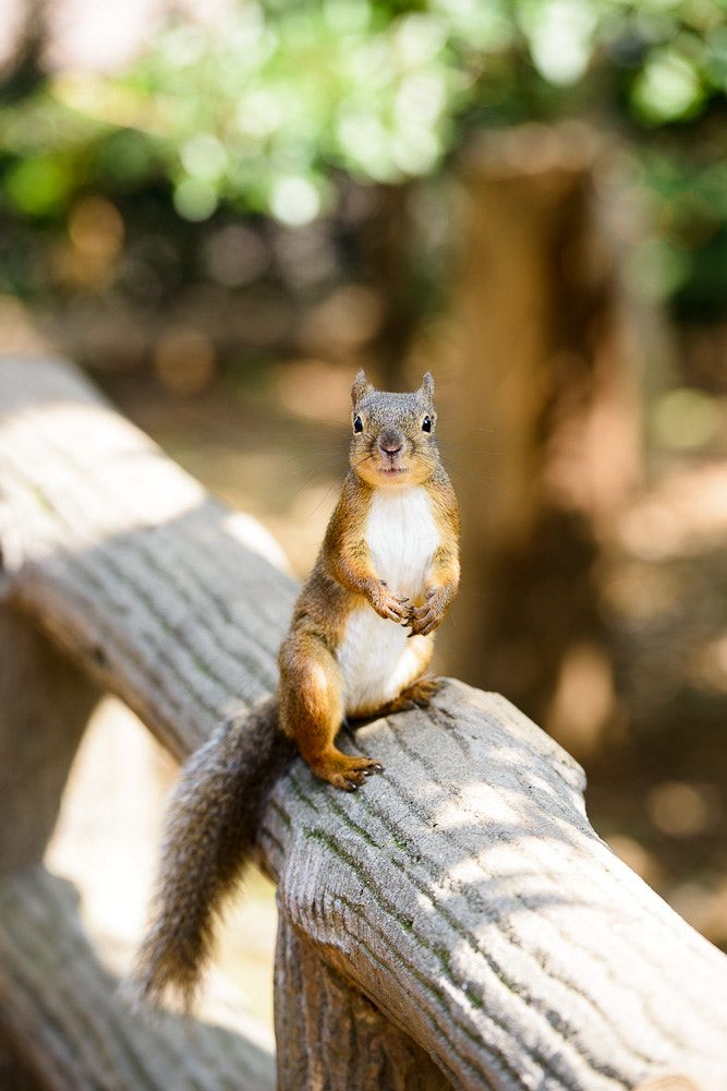 Getting Rid Of Squirrels In The Attic Northwest Exterminating