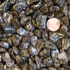 Turritella Agate polished gemstones