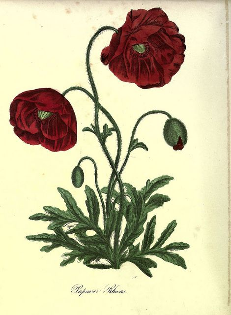 ooksaidthelibrarian:  n49_w1150 by BioDivLibrary on Flickr. Via Flickr: The Floral keepsake New-York :Leavitt & Allen,[185-?]biodiversitylibrary.org/page/22003794