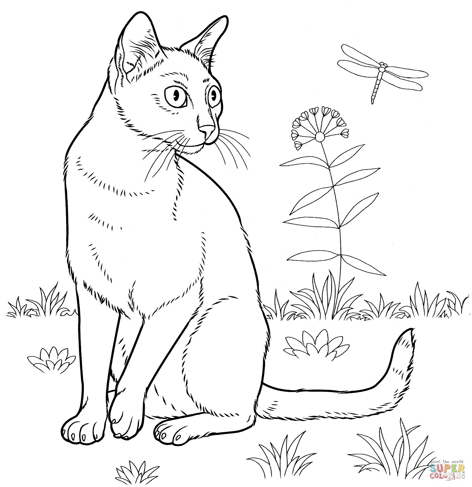 Birman Cat Coloring Pages Printable Cat coloring page