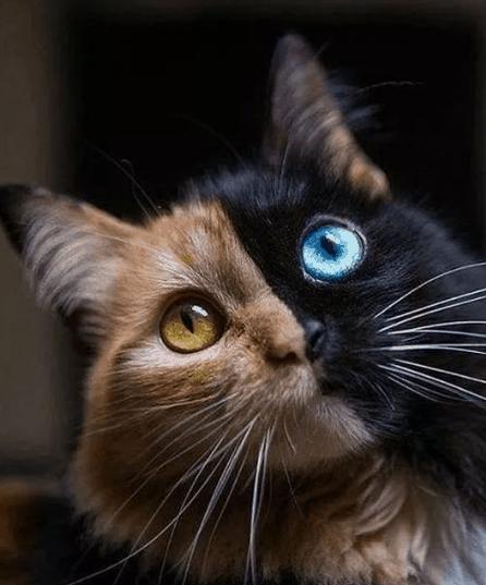Amazing Animals With The Chimera Gene Mutation