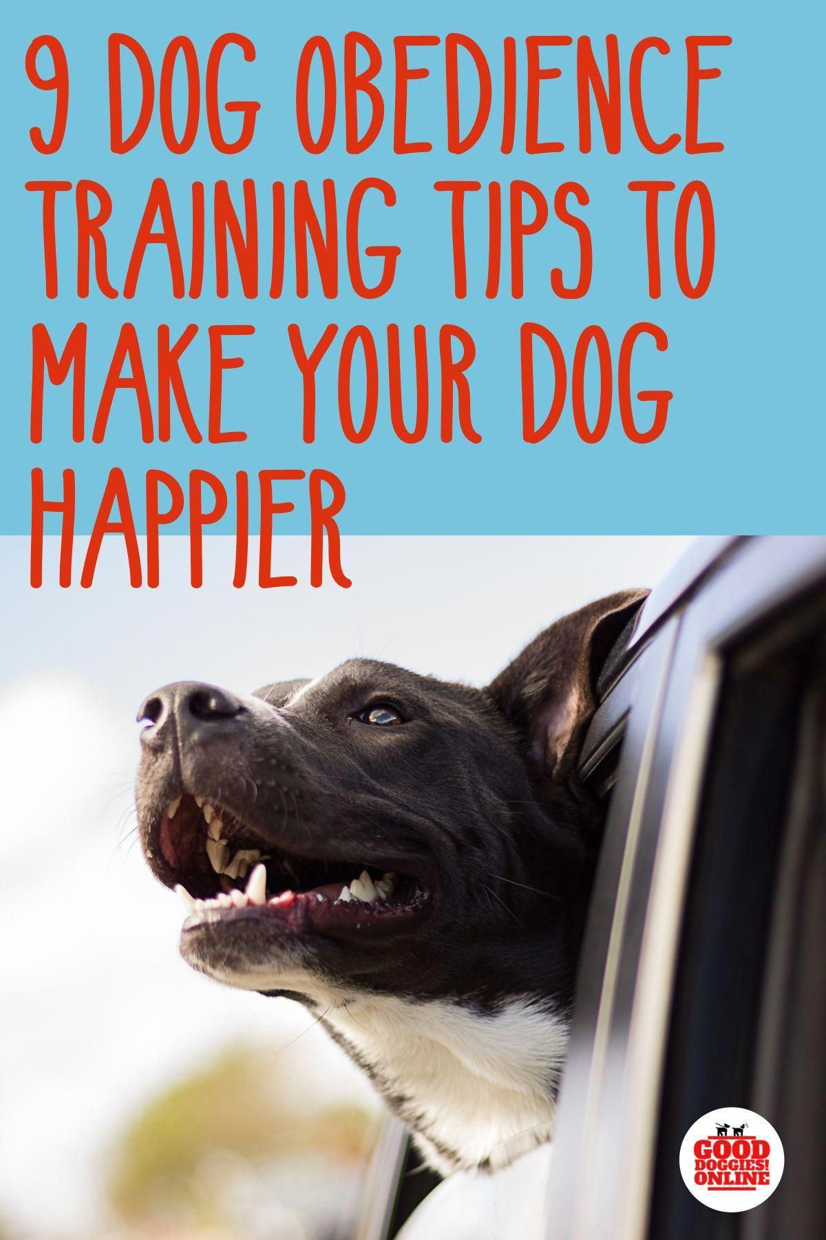 Fun Mental Techniques And Strategies For Mind Reading Tricks Over Text Dog Training Obedience Easiest Dogs To Train Dog Training