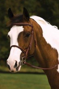 Hunters are supposed to wear simple caveson bridles with an elegant noseband and complementing browband. I love the braiding and variety of colour on this bridle, and I think my horse wants this for Christmas.