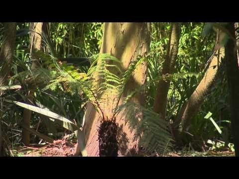 Jardin Botanique De Vauville Dans La Manche En Normandie Video
