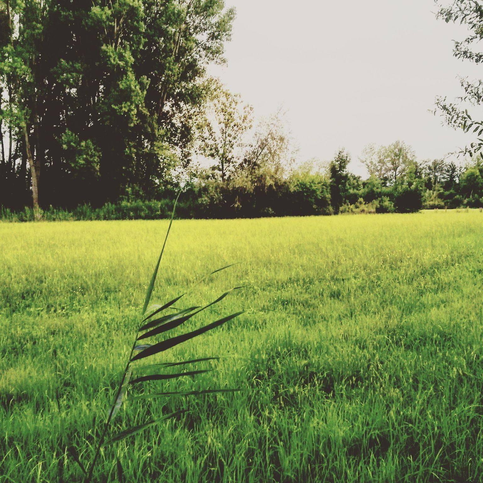 Verde come l' Erba