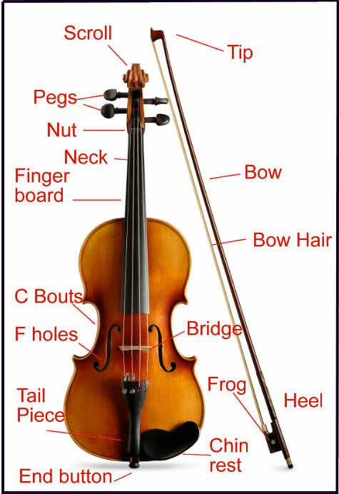 parts of the violin | Music | Violin, Music, Music instruments