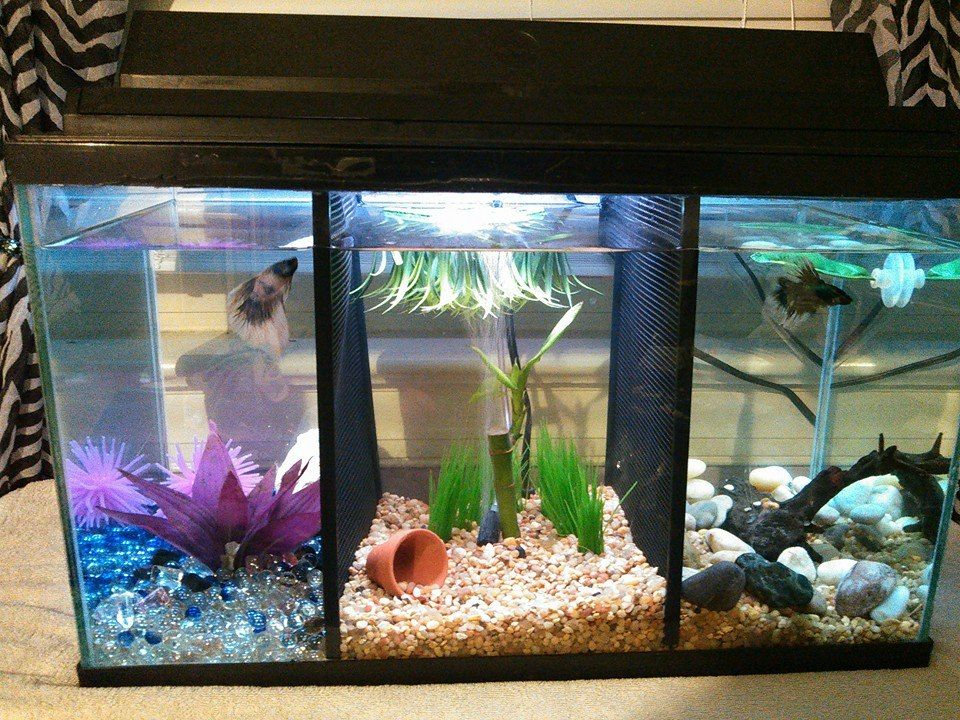 Divided betta tank fish tanks pinterest betta tank for Split fish tank