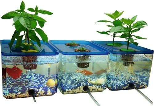 Hydroponics Gardening With Fish Fasci Garden