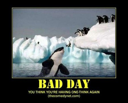 You Think You Re Having A Bad Day Think Again Bad Day Humor Funny Meme Pictures Funny Memes