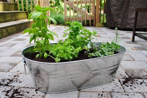 Amazing Making An Herb Garden In A Metal Tub