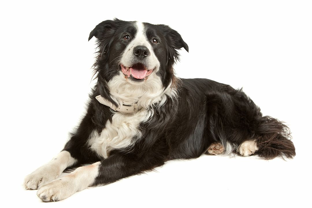 Crazy Cool Black And White Dog Names 37 Perfect Ideas Black And White Dog Dog Names Black Dog Names