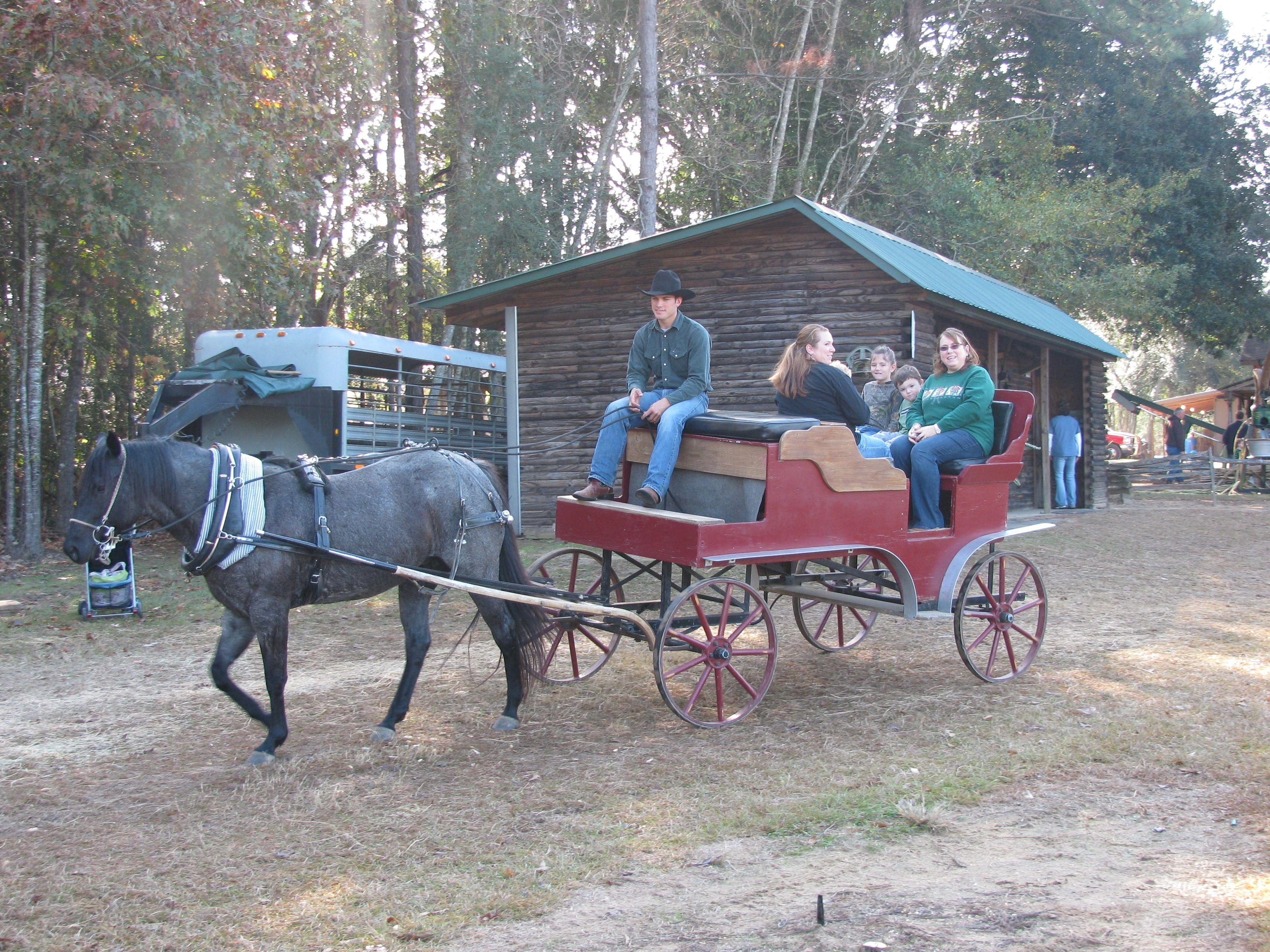 buggy ride grant christmas tree farm louisiana - Christmas Tree Farm Louisiana