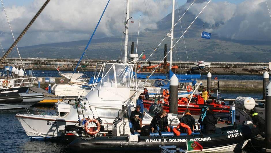 22. Februar, um 19:30 Uhr: '360° - Geo Reportage' zum Thema 'Azoren, das Geschäft mit den Walen' bei ARTE TV