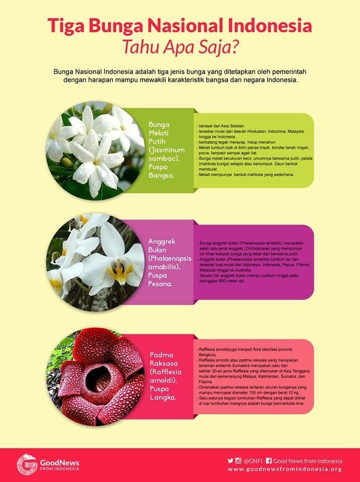 3 Bunga Nasional Indonesia Saines Indonesia Belajar Sosial Bunga