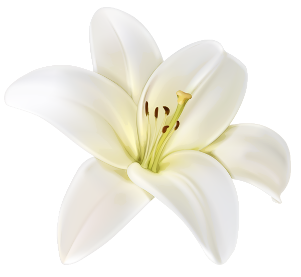 Beautiful White Flower PNG Clipart Image White flower