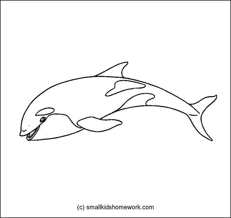killer whale outline picture - Whale Outline