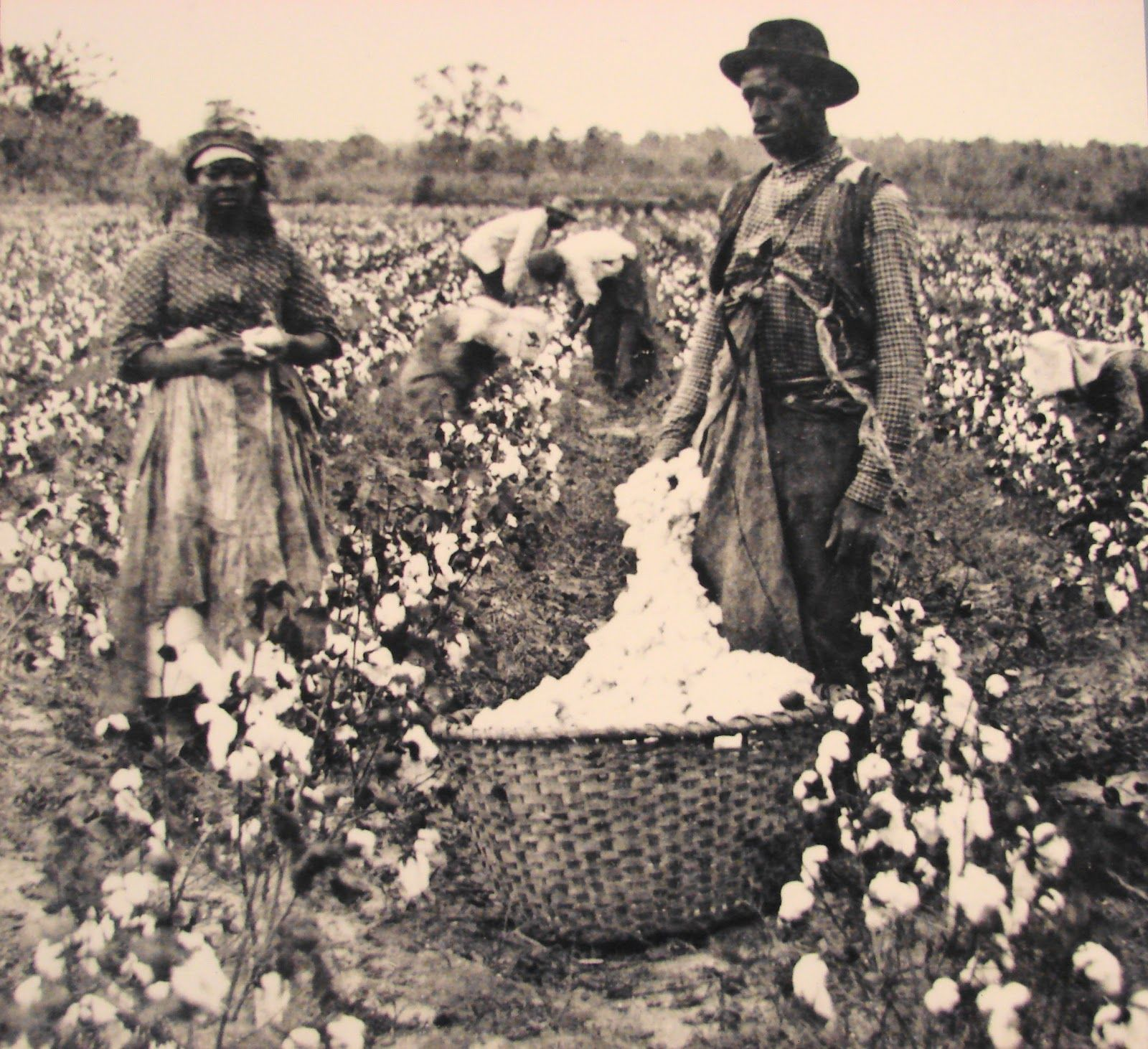 cotton slavery Andrew j torget, historian and professor at the university of north texas, will give a lecture based on his new book, seeds of empire: cotton, slavery, and the.