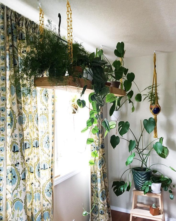 Clever ways to hang your plants plant inspiration best - How to hang plants in front of windows ...