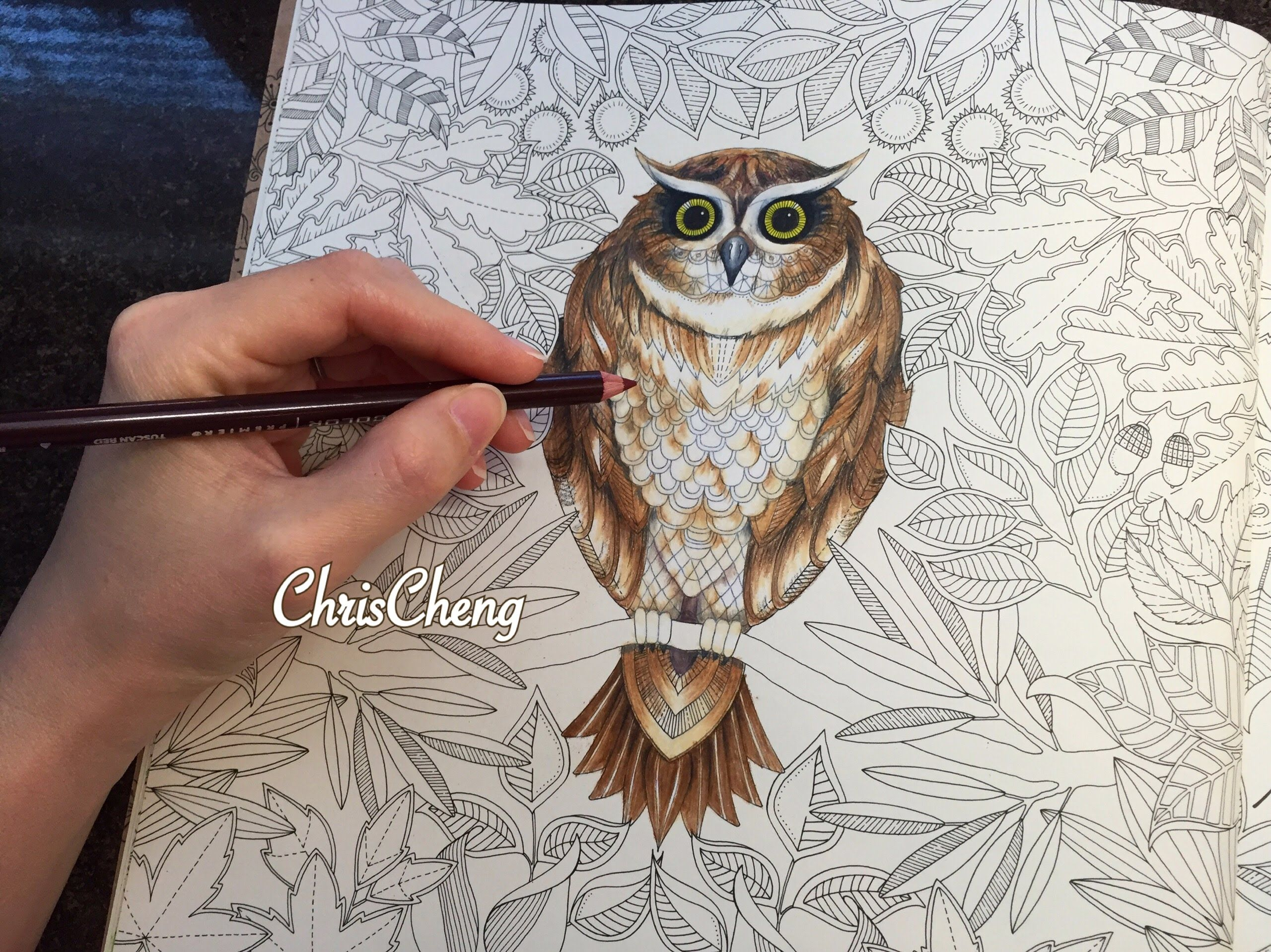 Secret Garden Owl S Coloring With Colored Pencils Secret Garden Coloring Book Finished Secret Garden Coloring Book Gardens Coloring Book