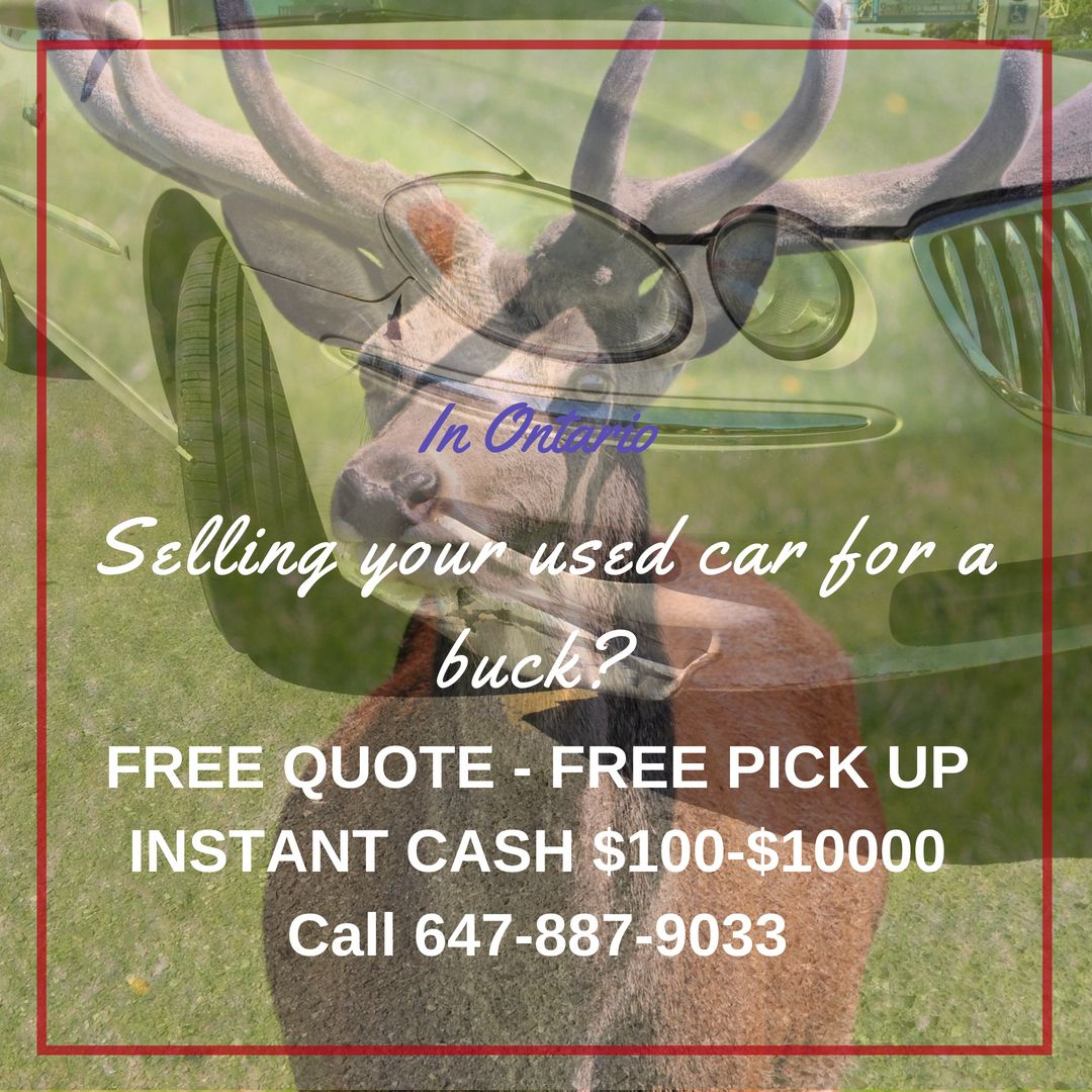 In Ontario We Pay Cash For ScrapCars 6478879033