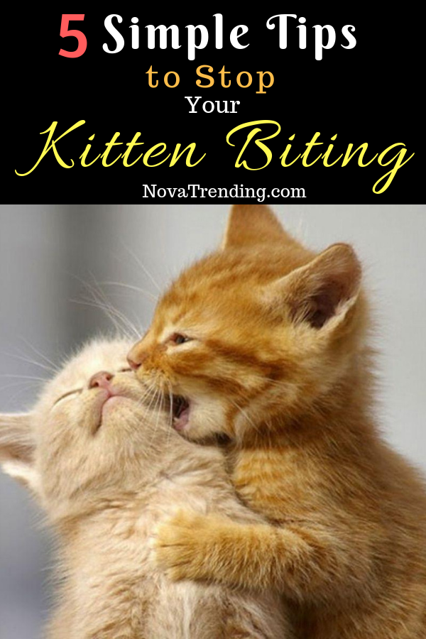 5 Simple Tips To Stop Your Kitten Biting Kitten Biting Cats Kittens