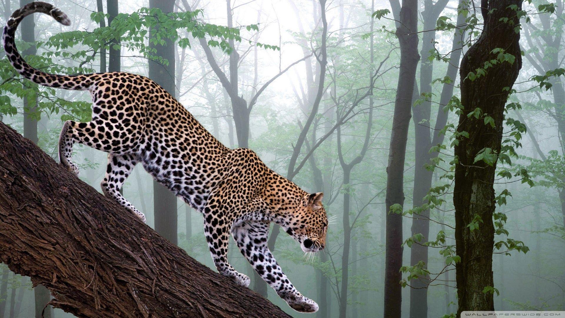 Jungle Wallpapers Hd Backgrounds Hayvanlar Jaguar Resimler