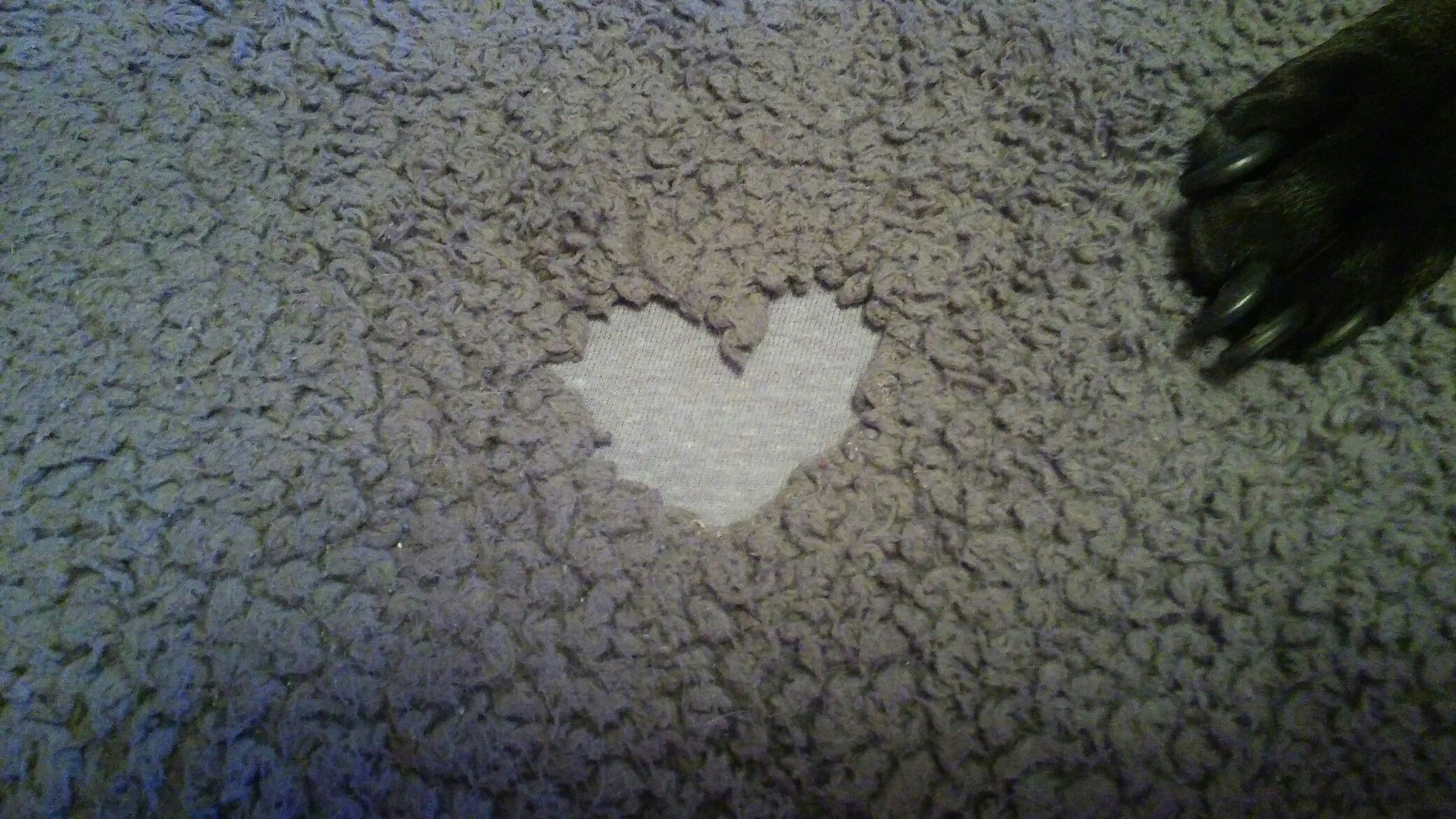 Heart Shaped Dog Chewed Hole In Blanket Dog Blanket Stop Dog Chewing Dog Bed
